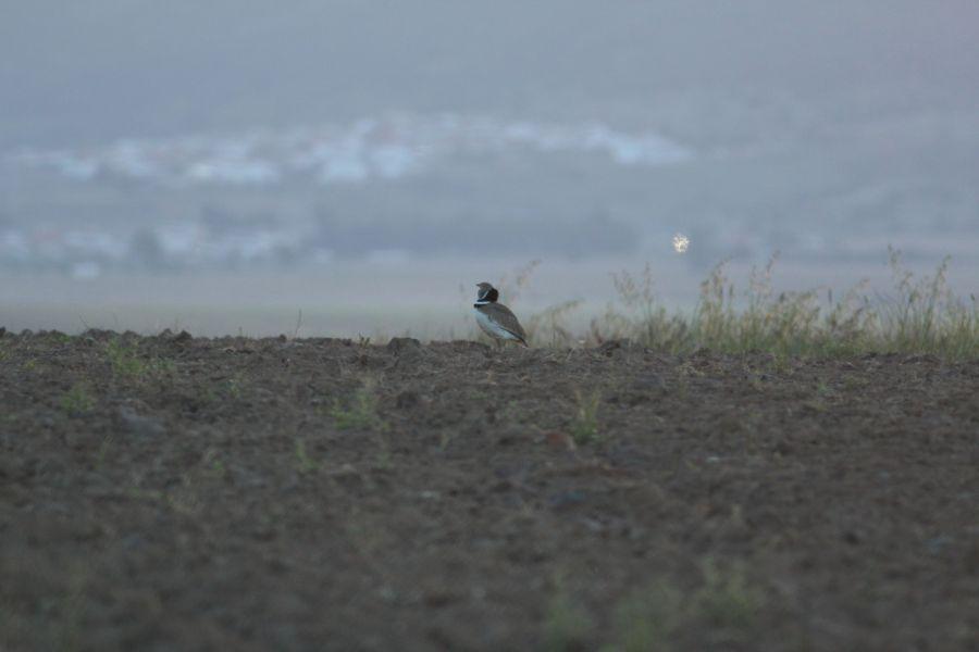 73167ae20b844 BirdWatching.pl - Wyprawy