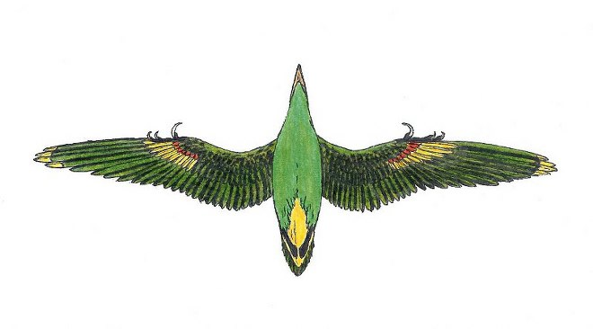 Birdwatchingpl Wiadomości